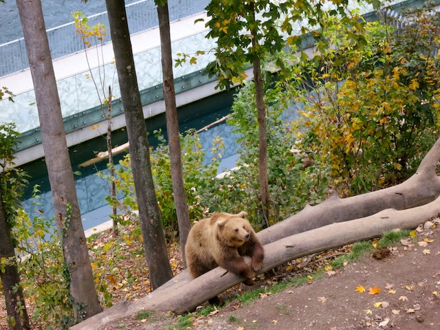 Free luxury travel Switzerland Bern Bear Park