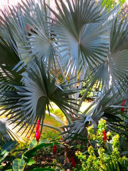 Grand Velas Riviera Maya jungle setting