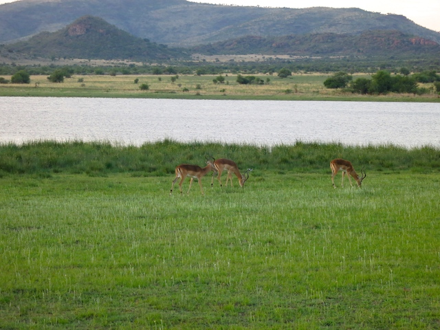 Looking for the Big 5 safari animals in Pilanesberg National Park