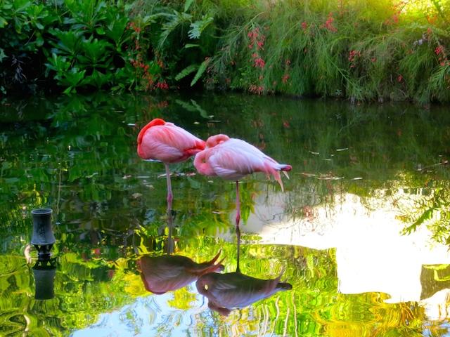 Flamingoes at Paradisus Punta Cana and Paradisus Palma Real