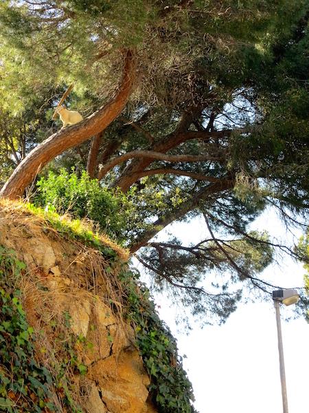 Cat in a tree Lloret de Mar Costa Brava