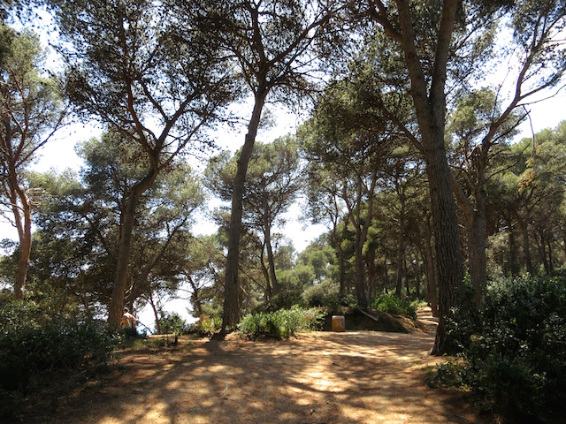 Coastal Forest path One day in Lloret de Mar