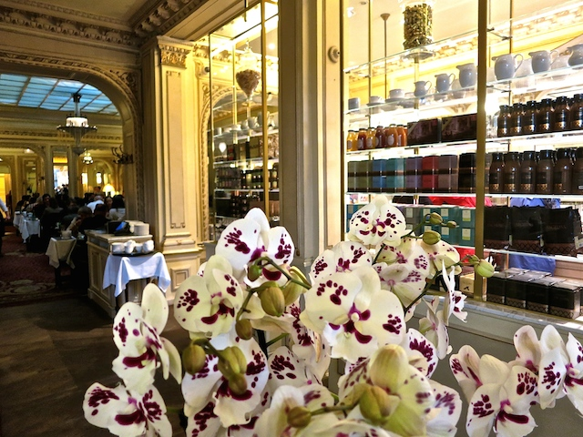 Angelina Teahouse in the footsteps of Coco Chanel in Paris, France