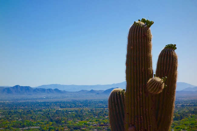 Camelback Mountain hike view of Paradise Valley