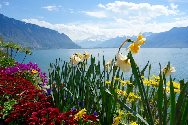 Promenade from Montreux to Chillon Castle