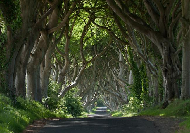 Dark Hedges Copyright Arthur Ward for Tourism Ireland