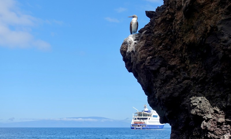Galapagos Islands cruise ship and blue-footed boobie