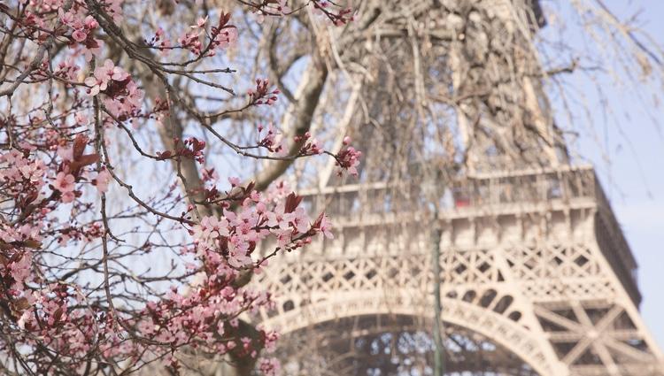 Paris private tours Eiffel Tower