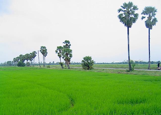Rice fields in northern Thailand