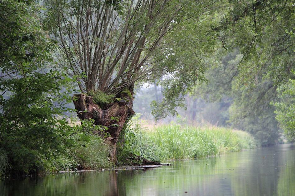 Kayaking Spreewald Biosphere Germany UNESCO