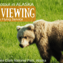 Alaska Brown Bear Watching- Ecotour in Lake Clark National Park