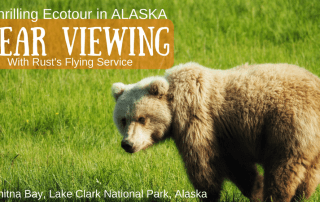 Alaska Brown Bear Viewing Ecotour Chinitna Bay Lake Clark National Park