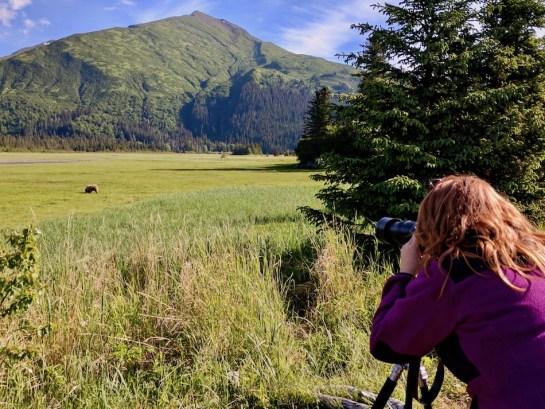 Brown bear viewing anchorage