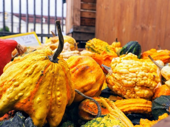 Mixed pumpkins and squash at the world's largest pumpkin festival in Ludwigsburg, Germany