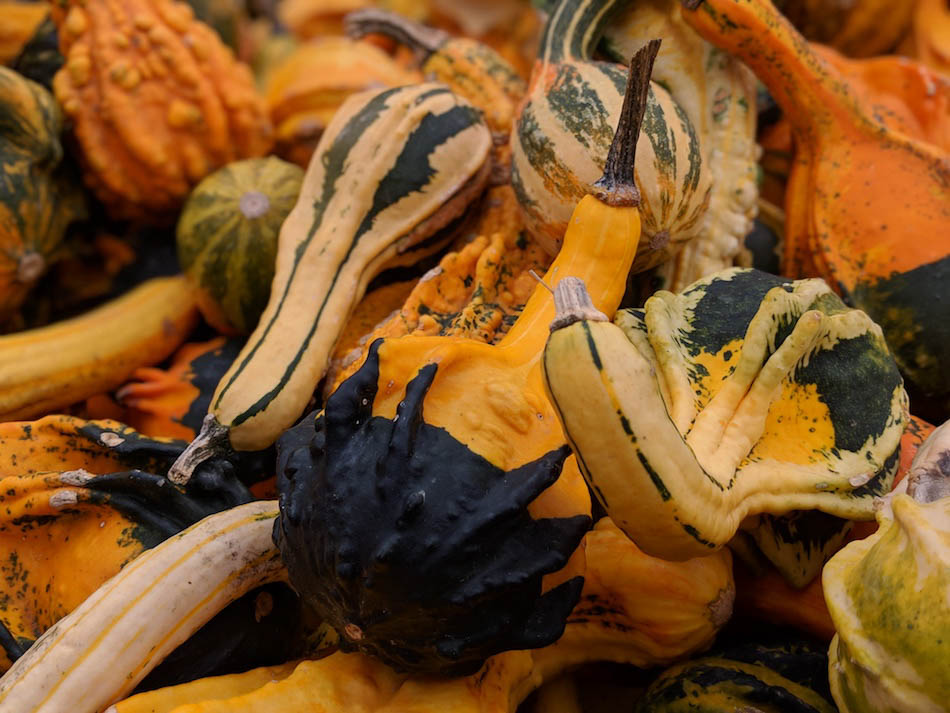 Mixed pumpkins at the world's largest pumpkin festival in Germany