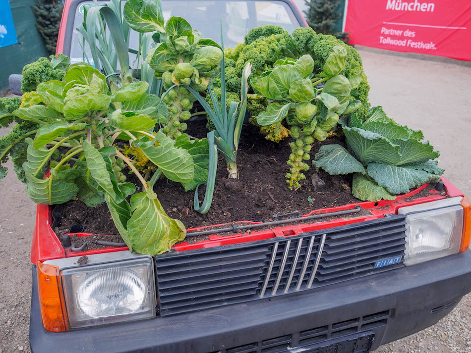 plants growing out of a car