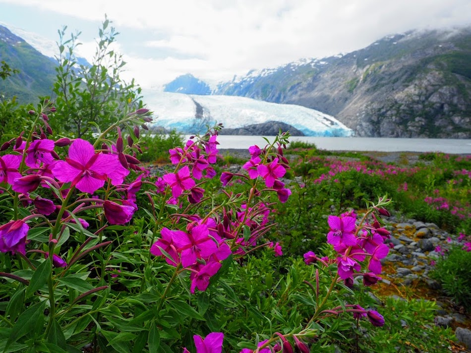 Portage Glacier Fireweed Alaska Hike