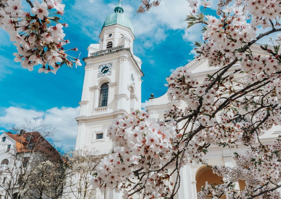 spring cherry blossoms and a historic church in Munich