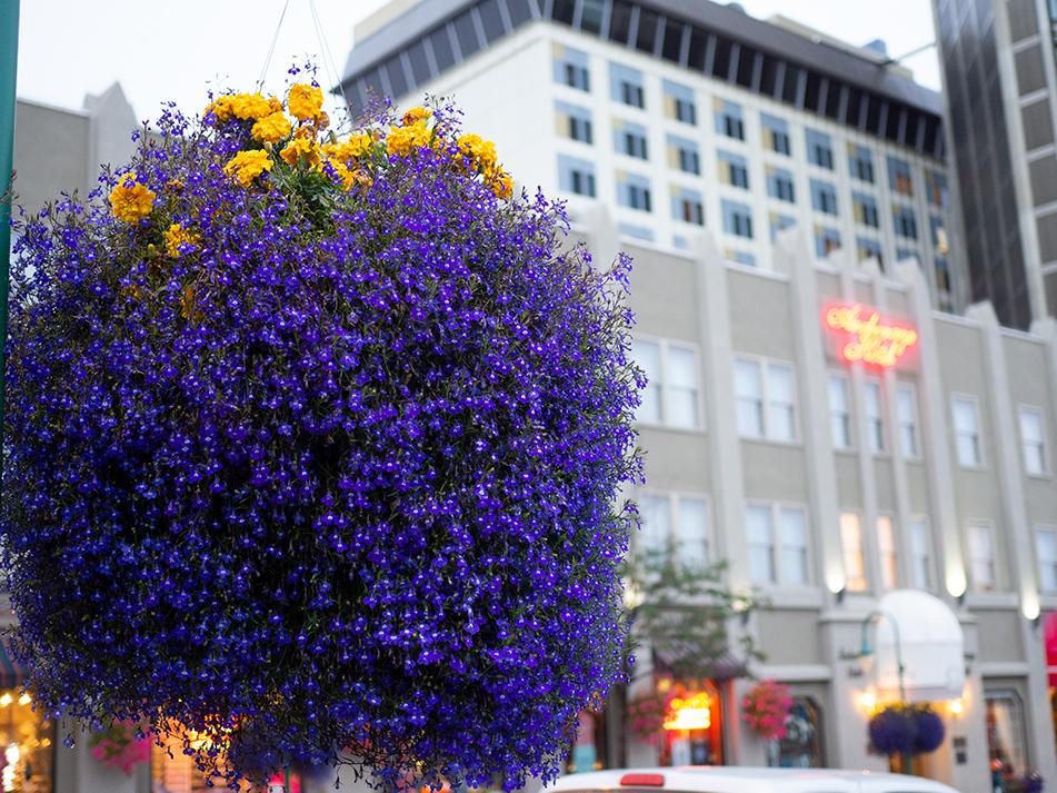 anchorage flower baskets