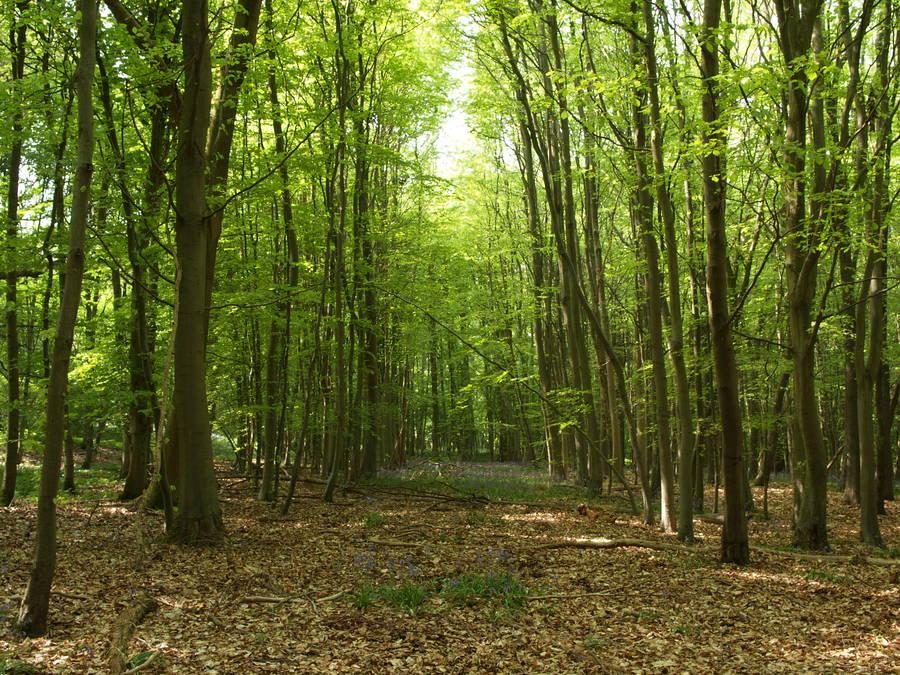 Wytham Woods  Oxford Blog