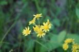 Wildflowers on Woodpecker Trail