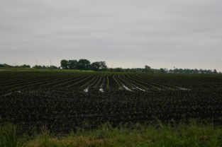 The campground is across the street from this field - notice the windmills in the distance