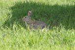 This bunny was trying to hide by not moving