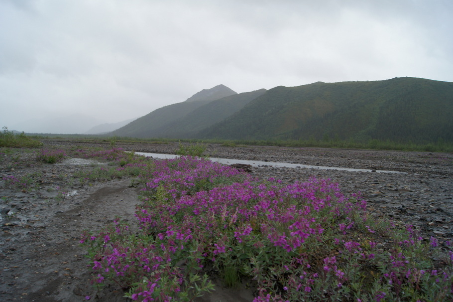Wildflowers growing in the middle of the riverbed