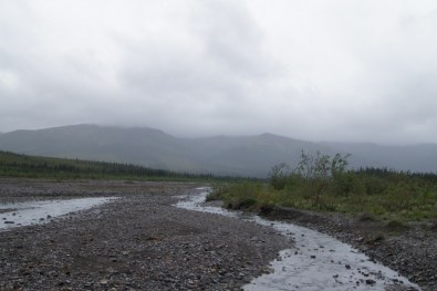We took a walk out to the Teklanika River in the rain