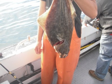My first Halibut!