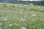 Wildflowers everywhere