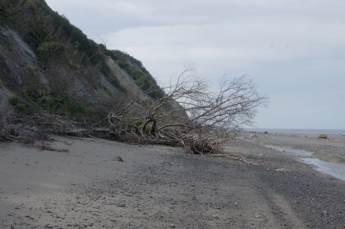 There were several downed trees at the base of the cliff