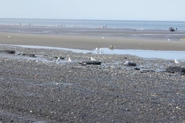 People strolling along the beach at low tide with the sea gulls in the foreground