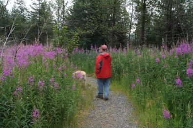 We walked through really tall fireweed