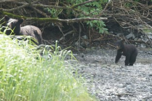 The cub followed his mama back into the woods