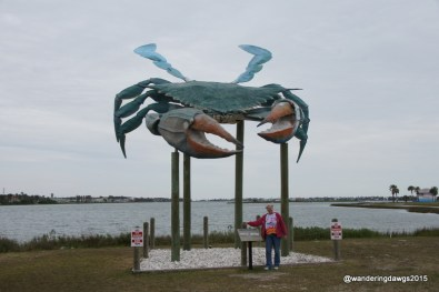Big Blue Crab in Rockport, Texas