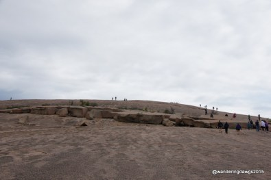 The camel on the way to the summit of Enchanted Rock