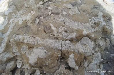 Devonian Fossil Gorge, Iowa