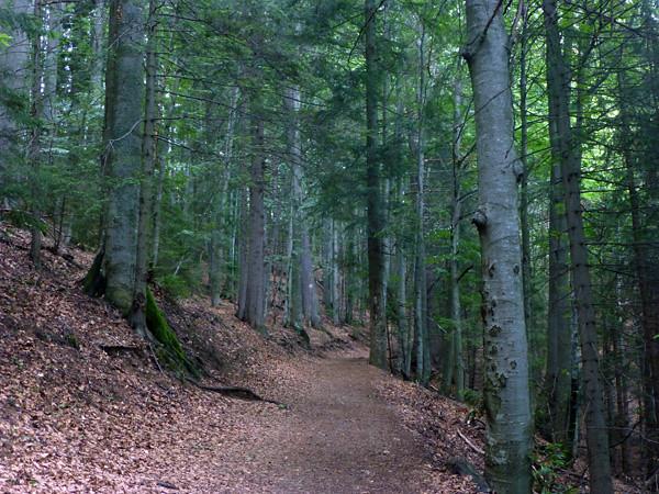 Hiking the Carpathian Mountains