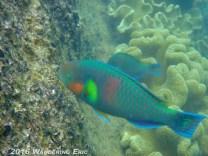 20110224_rainbow-fish-eating