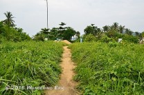 20110721_trail-to-the-beach-from-the-hostel