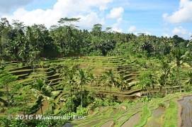 20110730_rice-paddies