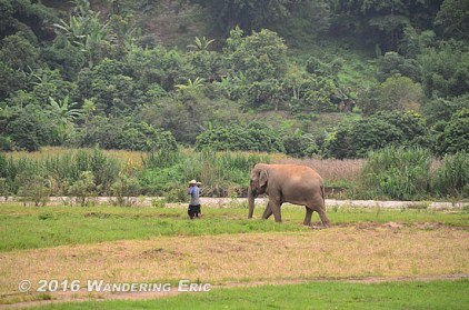 20110820_mahout-and-elephant
