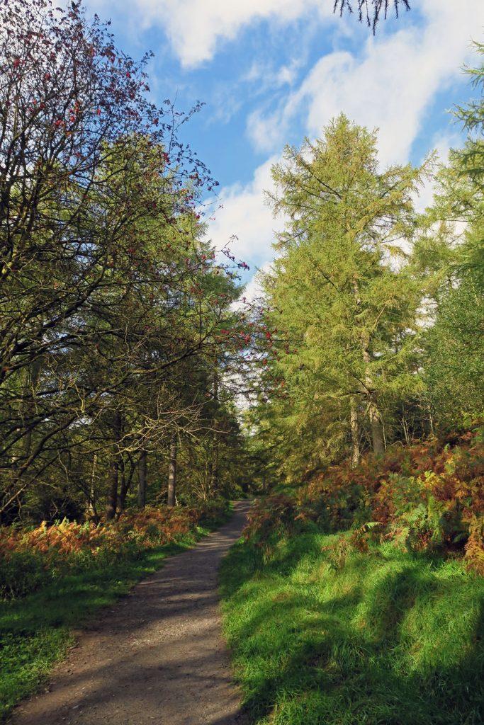 Autumn tree walks north wales