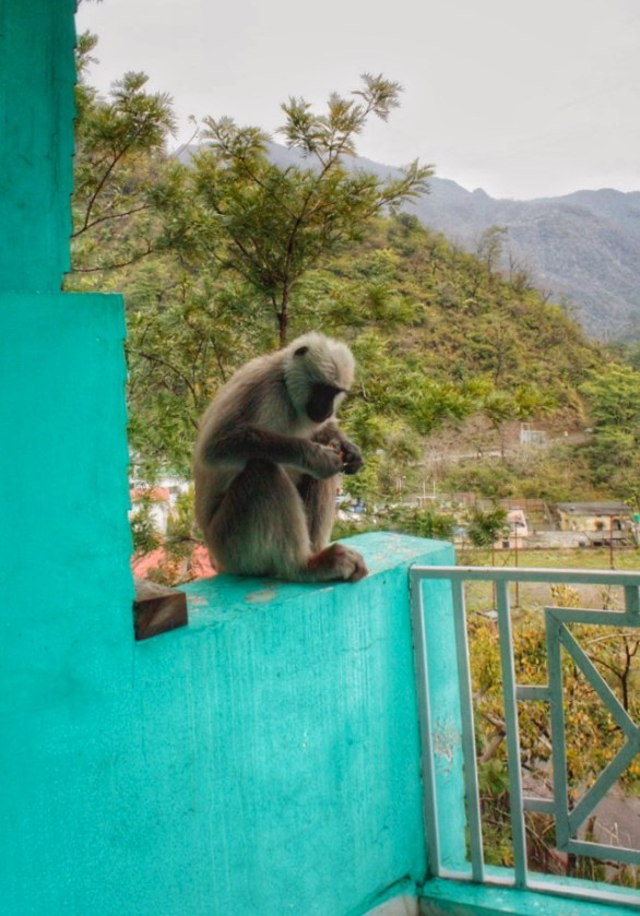 Monkey sitting on balcony in Rishikesh