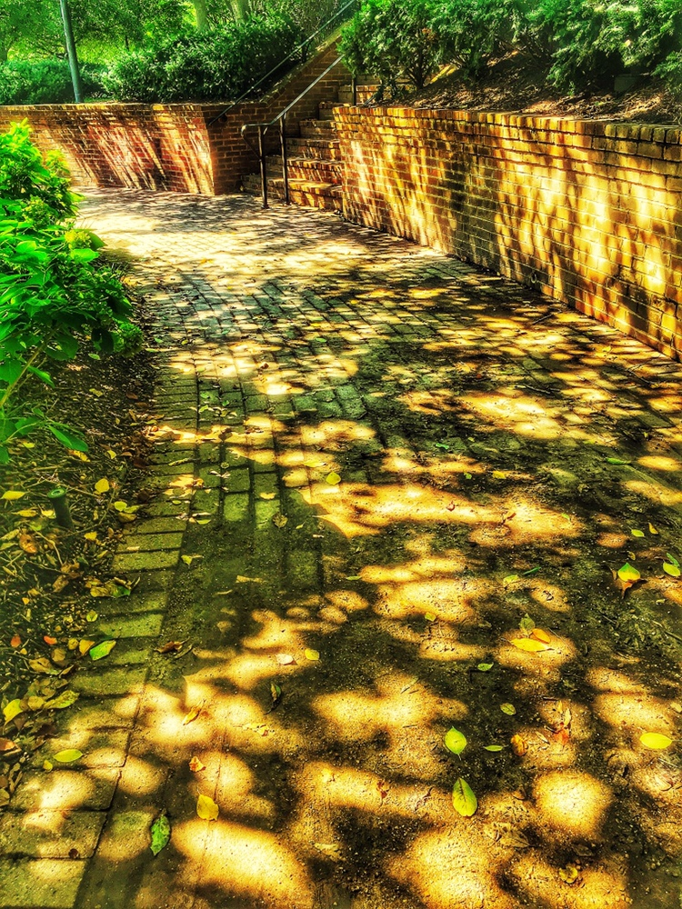 Fall shadows and pathways