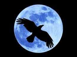 crow-moon