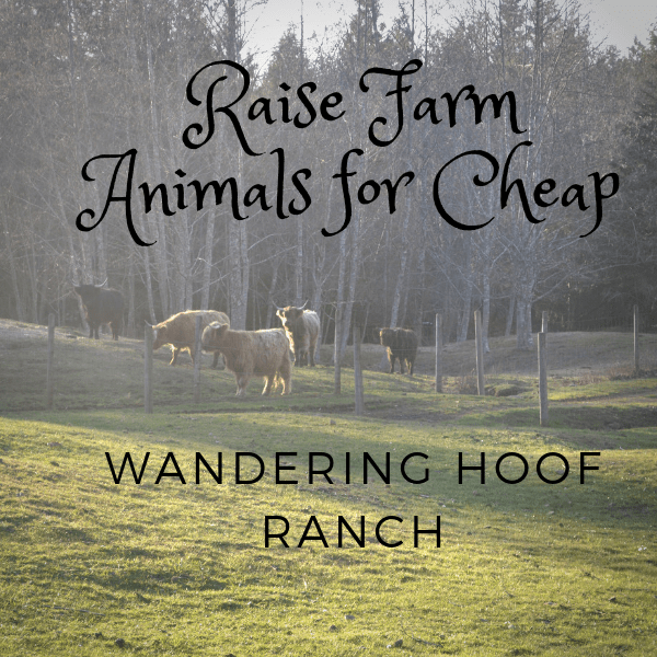 Getting started raising farm animals on the homestead is fun, raising farm animals for cheap is more fun, Here are some easy ways to raise farm animals on a cheap farming budget.