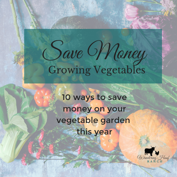 This year save money growing vegetables on your homestead. Be smart when planning, planting and harvesting from your vegetable garden with our ten tips.