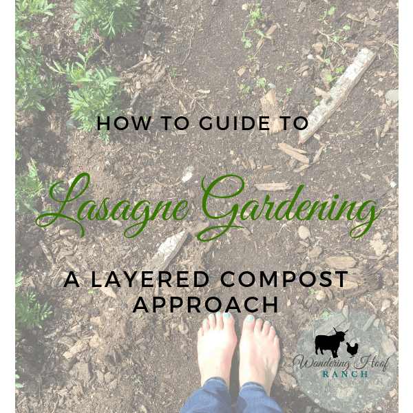 Build a lasagne garden for your next vegetable garden plot using cardboard, compost, leaves, fresh and aged manure. This garden plot method is cost effective and produces large healthy vegetable plants with little to no maintenance.